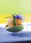 Boiled egg in eggcup with salt and flower