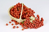 Rowan berries in a small basket
