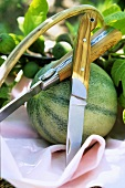 Watermelon and figs on branch with two knives