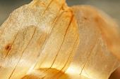 Schale einer braunen Gemüsezwiebel