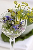 Borage and fennel flowers in glass