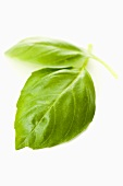 Two basil leaves