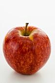 A 'Royal Gala' apple