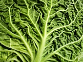 A savoy cabbage leaf