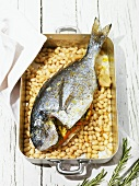 Baked sea bream on Tuscan beans