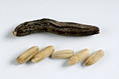 Ergot and grains of rye