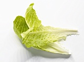 Three romaine lettuce leaves
