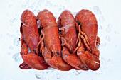 Four frozen lobsters