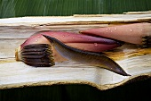 Spiny eel on a banana flower