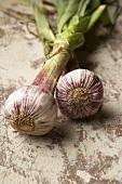 Fresh garlic with stalks
