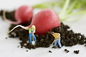 Little toy men beside radishes