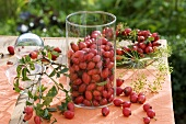 Rose hips in a glass