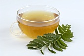 Silverweed tea and fresh leaf