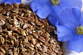 Linseed and flax flowers