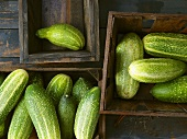 Braising cucumbers in wooden boxes