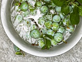 Fresh greengages in a bowl of water