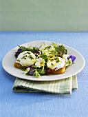 Herb salad with toasted ciabatta and goat's cheese