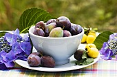 Small bowl of damsons surrounded by hydrangeas