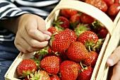 Fresh strawberries in a woodchip basket