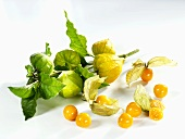 Cape gooseberries with stalk