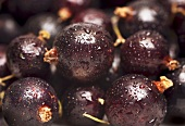 Blackcurrants with drops of water