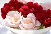 Pink and red roses in a glass dish