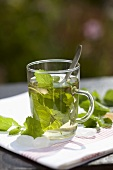 Peppermint tea with fresh peppermint in glass