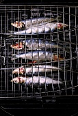 Sardines in a fish grilling basket on a barbecue
