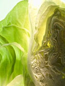 Half a pointed cabbage