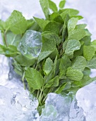 Fresh mint on ice