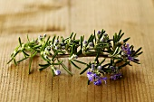A flowering sprig of rosemary