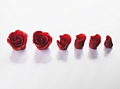 Marzipan roses