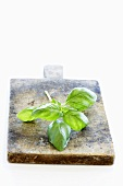 A sprig of basil on a wooden board