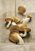 A pile of fresh king trumpet mushroom