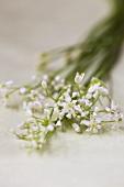 Flowering garlic chives