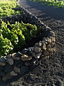A stone wall dividing vineyards, Lanzarote