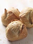 Three freshly baked bread rolls (close up)