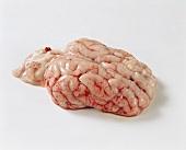 A pig' brain