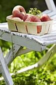 Pfirsiche im Spankorb auf Gartenstuhl