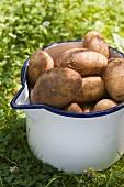 Alter Emailletopf mit frisch geernteten Kartoffeln