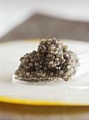 Grey caviar on a plastic spoon