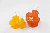 Yellow and orange nasturtiums