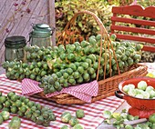 Brussels sprouts on the stalk in a basket, out of doors
