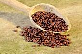 Jujube seeds (Ziziphus spinosa) with wooden spoon