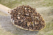 Dried herb bennet (Geum urbanum L.) on a wooden spoon