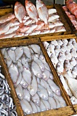 Various fish on a market stall in Morocco