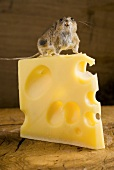 Live mouse on a piece of Emmental cheese