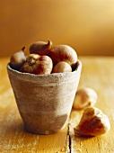 Garlic bulbs in a terracotta pot