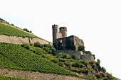 Vineyard with castle near Assmanshausen am Rhein, Germany