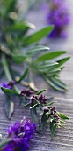 Hyssop with flowers on wooden background